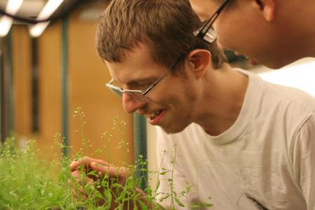 William Jordan and Lexiang Ji look over one of many sets of Arabidopsis thaliana, which were used to research a new plant breeding technique.